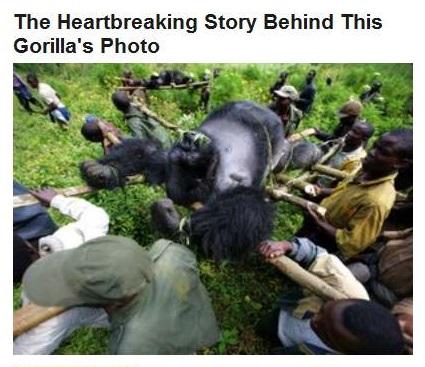 10-28-2015 FPHL 23-05 - HP weeps for gorilla