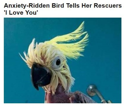 11-14-2015 FPHL 11-44 bird