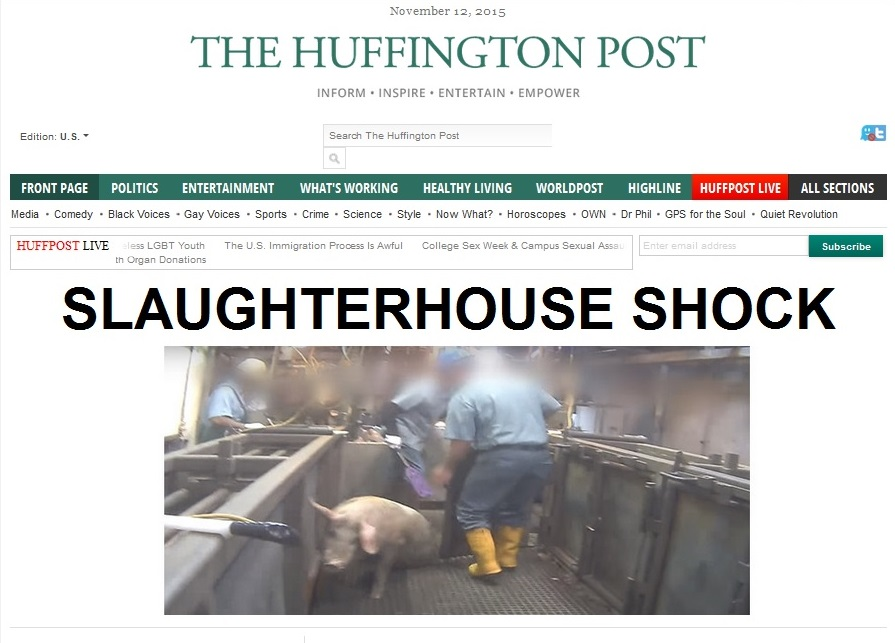 12Nov15 HP WEEPS FOR ANIMAL SLAUGHTERHOUSE splash - NO JEWS